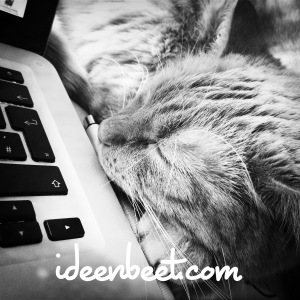 Powercatnapping - ideenbeet.com